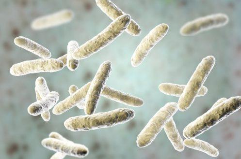 Probiotic bacteria, normal intestinal microflora, 3D illustration. Bacteria used as probiotic treatment, yoghurts, healthy food